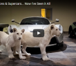 lions_and_supercars_catar_1