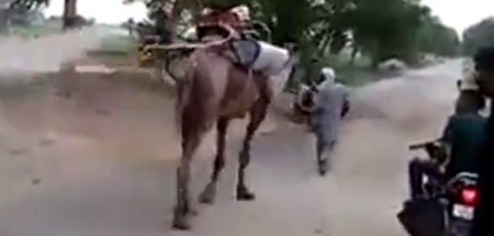Pakistański pojazd dodezynfekcji – grunt tokreatywność (Video)