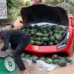 Ferrari replica and watermelons