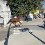 Koń w Lublinie